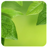 S8 Green Leaf Live Wallpaper