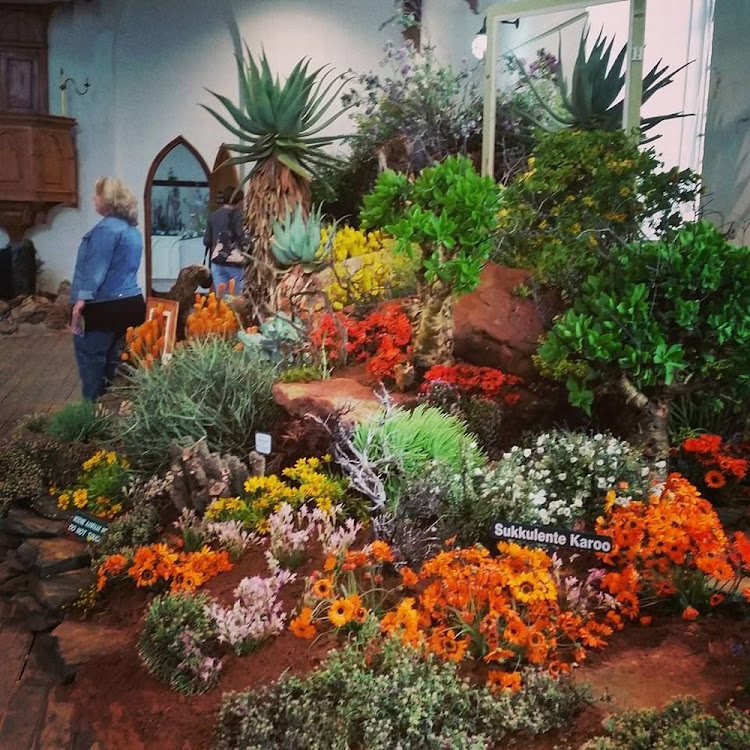 The Clanwilliam Wildflower Show