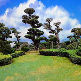 Nanhu Park, Nanning  by Xiufen Gu - Landscapes Forests ( nanning, nanning china, nanhu,  )
