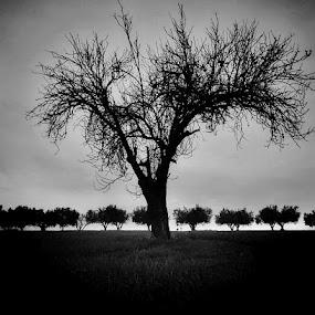 The garden of Eden by Matthew Miller - Black & White Landscapes ( noir, black and white, dark, trees, garden )