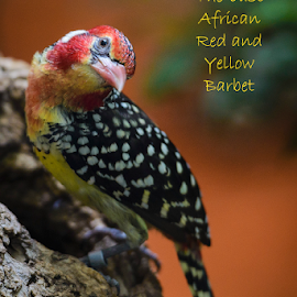 by Judy Rosanno - Typography Captioned Photos ( san antonio zoo )