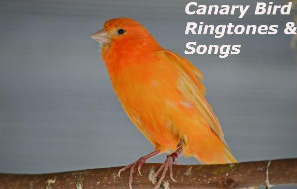 Download Birds singing ver3 ringtone free