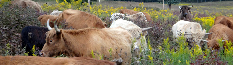 Photo: Scottish Highlands float and bob in an old field sea of diverse forage