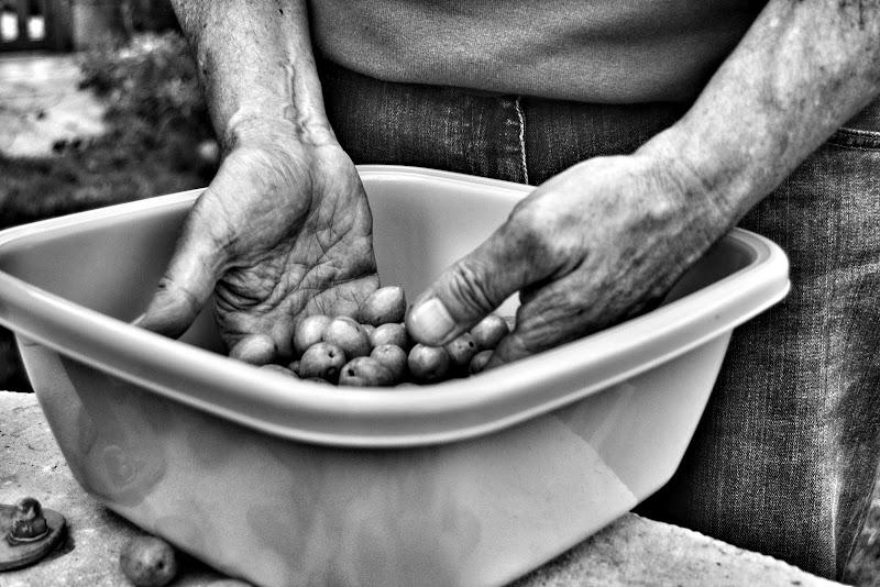 La raccolta delle olive di aurorasogna83