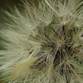 spikey by Pungut Luntar - Nature Up Close Other plants