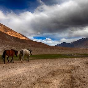 by Jasminder Oberoi - Landscapes Travel ( canon, clouds, canon 5d mark ii, workshop, horses, incredible india, jammu and kashmir, travel, places, ladakh, landscape, nomadic ladakh, light chasers, leh, nature, photo tour, blue, klik, tangtse, india, bliss, masterclass, jas fotography )
