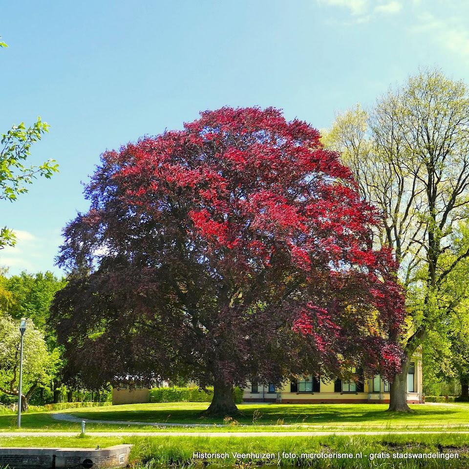 Aangeboden door: Stichting Microtoerisme InZicht Fotoblog Veenhuizen Woning stichtelijk rode beuk