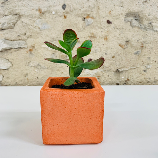 pot en béton coloré orange avec succulente