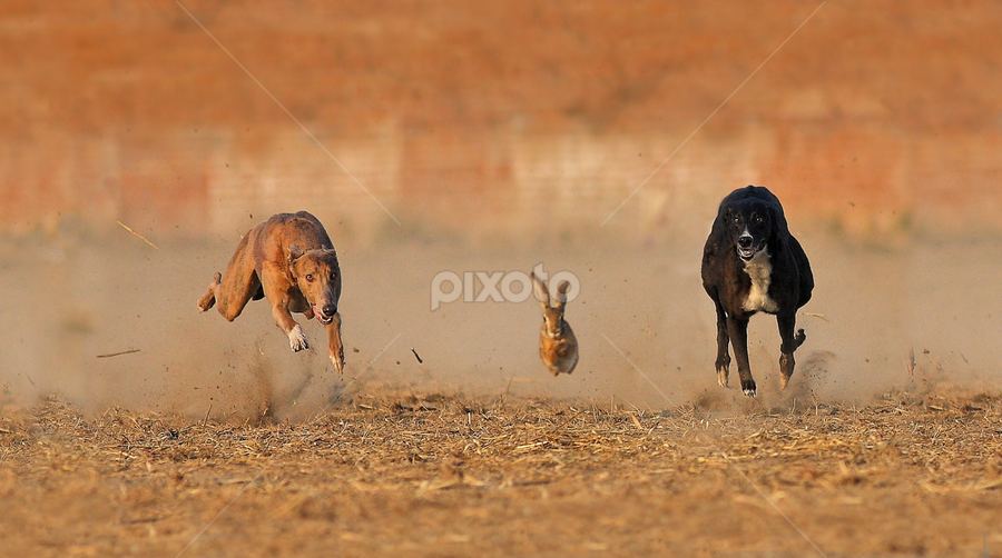Race for life by Zahoor Salmi - Animals Other Mammals ( nature, zahoorsalmi, animals, birds, wildlife )
