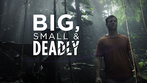 Big, Small & Deadly thumbnail