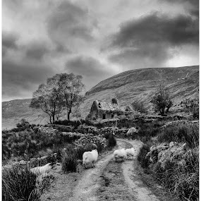 Drumluska Cottage by Helen Quirke  - Landscapes Mountains & Hills ( kerry, black valley, drumluska,  )
