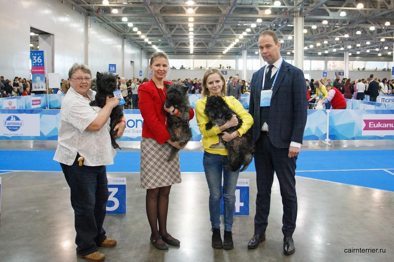 Фото керн терьеров питомника Еливс победителей с владельцем, хендлерами и экспертом на призовом месте выставки.