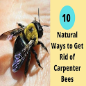 How To Get Rid Of Carpenter Bees 2021 icon