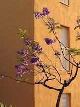 Photo: Pretty purple tree outside the apartment