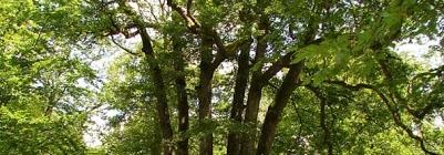 sentier des 6 frères de Moyemont