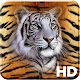 Tiger Wallpapers HD Download on Windows