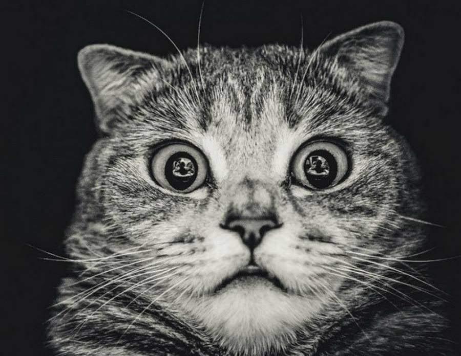 Картинки для вайбера на аву (40 фото) - прикольные картинки и позитив