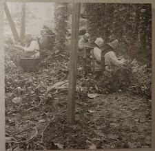 Photo: Monks from Westvleteren in the hops fields, (photo in the Hops Museum, Poperinge)