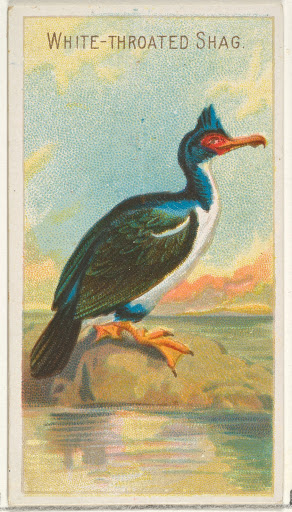 White-Throated Shag, from the Birds of the Tropics series (N5) for Allen & Ginter Cigarettes Brands