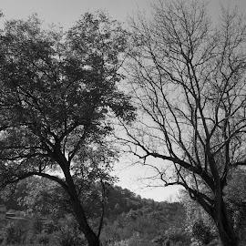 Черно и бяло by Georgi Kolev - Black & White Landscapes ( природа., ден., летен., време., тишина. )