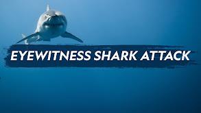Eyewitness Shark Attack thumbnail