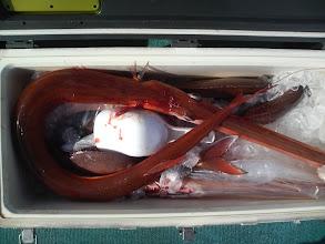 Photo: こちらは、クーラーに入れた真鯛とヤガラです!