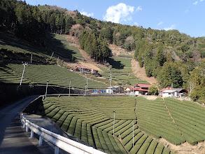 川合の茶畑