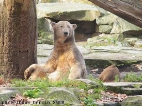 Photo: Knut - ganz laessig :-)