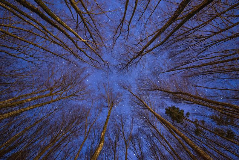 Alberi nella notte di Peter_Sossi