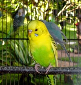 pretty-parrot-01-287x300.jpg