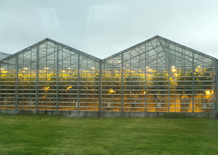 Photo: We visited the Espiflot greenhouses where they use geothermal energy to grow various flowers.