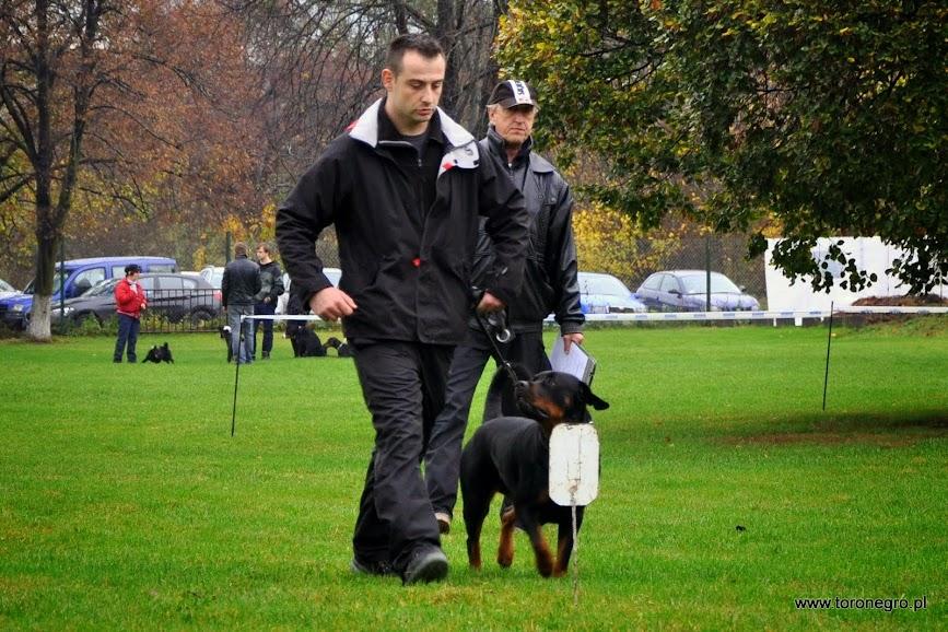 prawidłowe chodzenie przy nodze psa