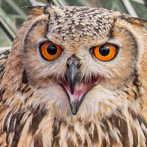 Owl pixoto.jpg