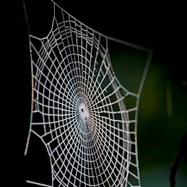 by Siniša Almaši - Nature Up Close Webs ( view, forest, depth, nature, web, light, up close, tree, spider )