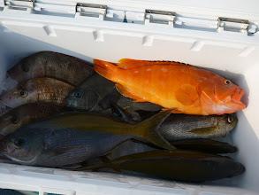 Photo: エグチさんの釣果! ウメイロ、アカハタ、イサキ、クロ・・・
