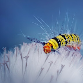 bring me to life by Setiady Wijaya - Animals Insects & Spiders