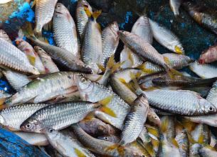 Photo: Die Männer verkaufen die Fische an ihre Frauen, die wiederum verkaufen sie zu ihrem Preis auf dem Markt.