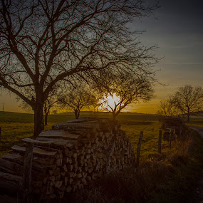 The french countryside by Anne-Cecile Pflieger - Landscapes Prairies, Meadows & Fields ( countryside, stacked, pathway, wood, green, way, yellow, road, sunlight, sun, country, annececilegraphic, tree, blue, sunset, path, trees, france, pile, wood pile, stack )
