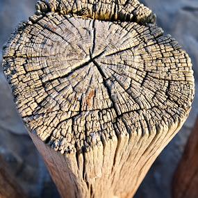 Beach Stump  by Benjamin Arthur - Artistic Objects Other Objects ( stump, wood, benjamin, holland, photographer, benjaminarthur.com, beach, ameland, photography, netherlands, arthur )