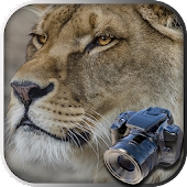 Hidden Animals game : Photo Hunt . Search Objects
