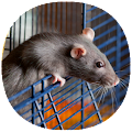 How to Take Care of a Pet Rat APK
