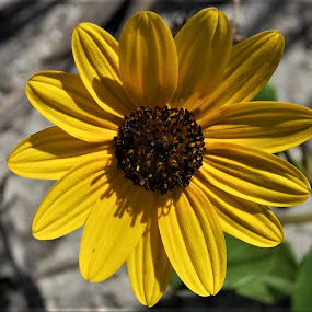 Yellow by Keith Heinly - Flowers Flowers in the Wild ( plant, florida, yellow, disney, flower )