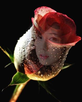 Rose Flower Frames Transparent