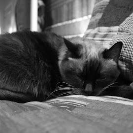 by Randi Landers - Animals - Cats Portraits (  )