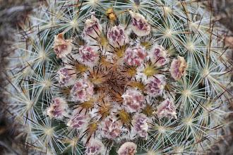 Photo: Pretty Cactus