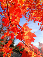 Photo: Bright orange leaves against a blue sky at Eastwood Park in Dayton, Ohio.