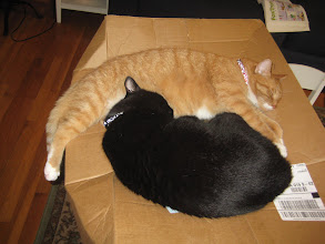 Photo: Data and Tiberius like cardbaord - and each other.