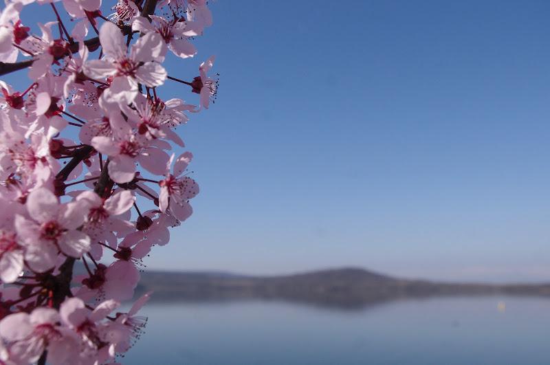 Fiori sul lago di Marck Nibi