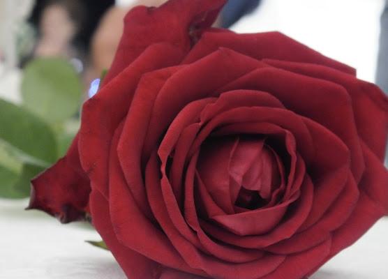 L'amore in un fiore  di Domenica_28