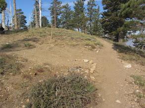 Photo: 9:29 -South Hawking Ridge Trail junction (8390')